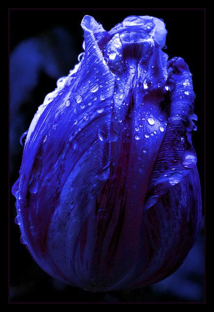 Nachtblume
