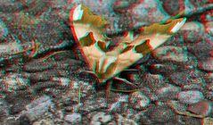 Nachtfalter - Lepidoptera