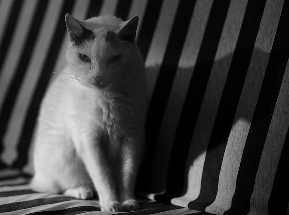 Nachtkatze