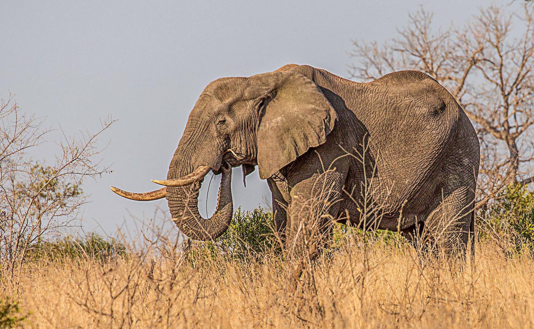 Nachtrag zum Welt-Elefanten-Tag