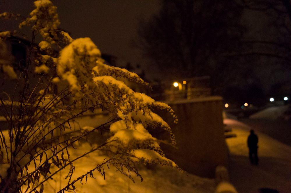 Nachts am Wallgraben in Delitzsch