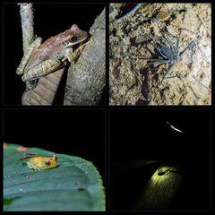 Nachts im Dschungel