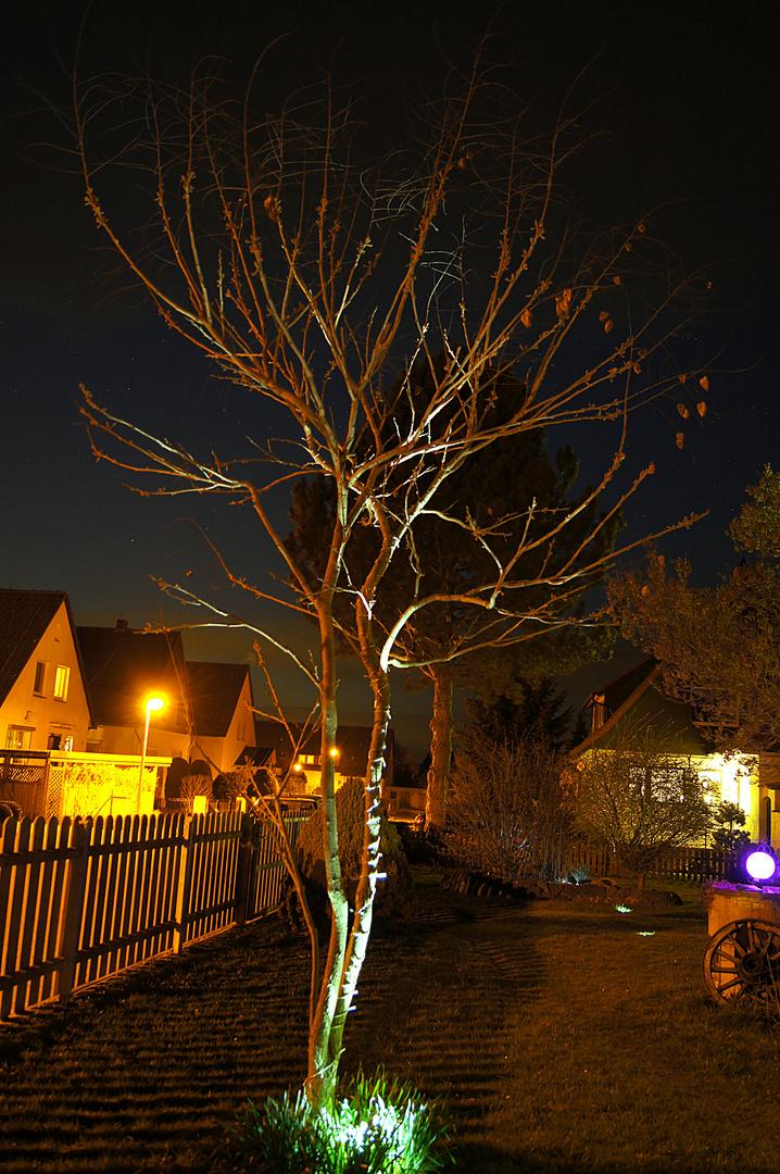 Nachts im Garten