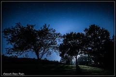 Nachts im Kurpark