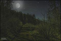 """Nachts im Wald"""