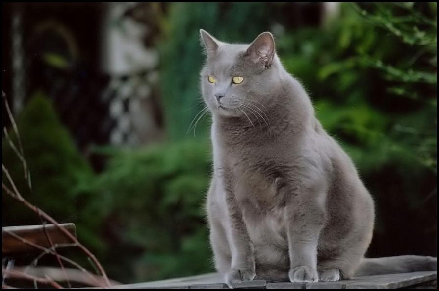 Alle Katzen Sind Grau