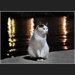 Nachts sind nicht alle Katzen grau