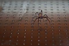 Nachts Spinne an der Glastür