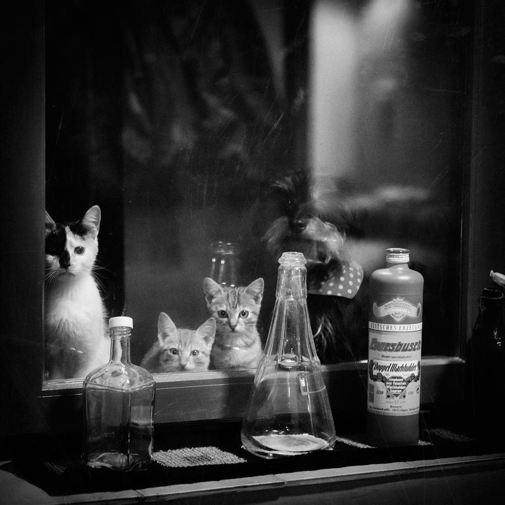 Nachts um zwei Uhr in Ungarn und drei Flaschen Wein später...ein Blick aus dem Fenster.