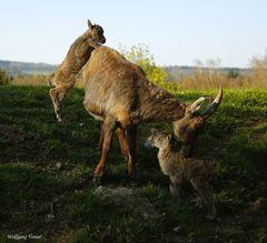 Nachwuchs im Wild-und Freizeitpark Allensbach