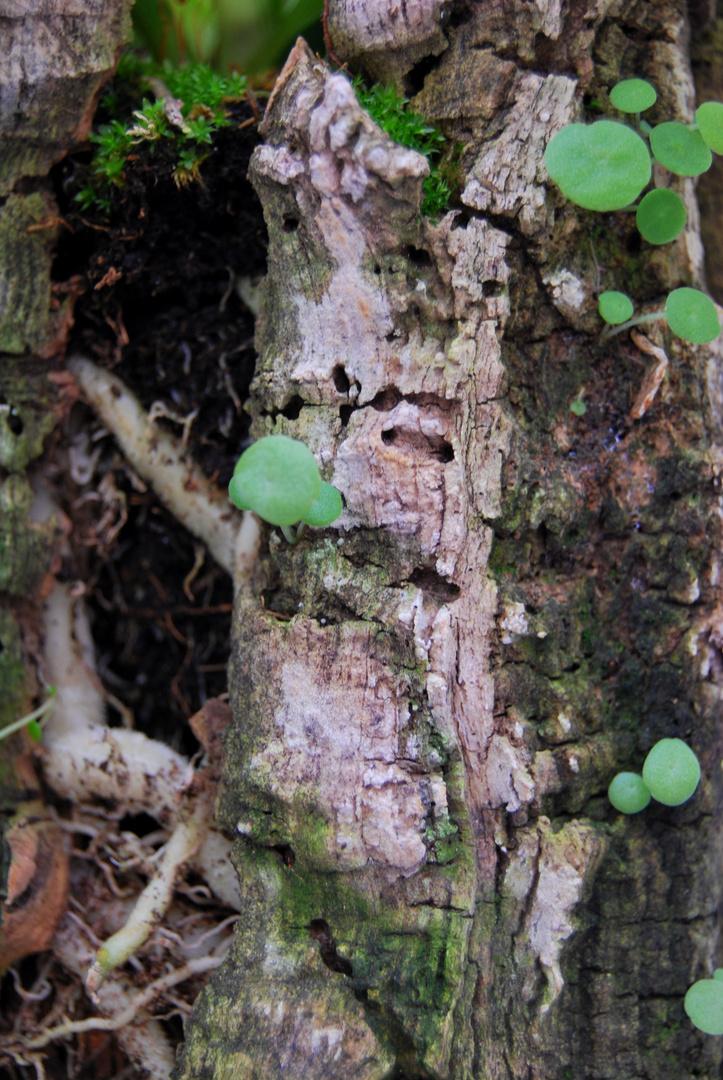 nacimiento de plantas