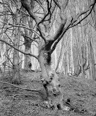 Nackter Wald_1