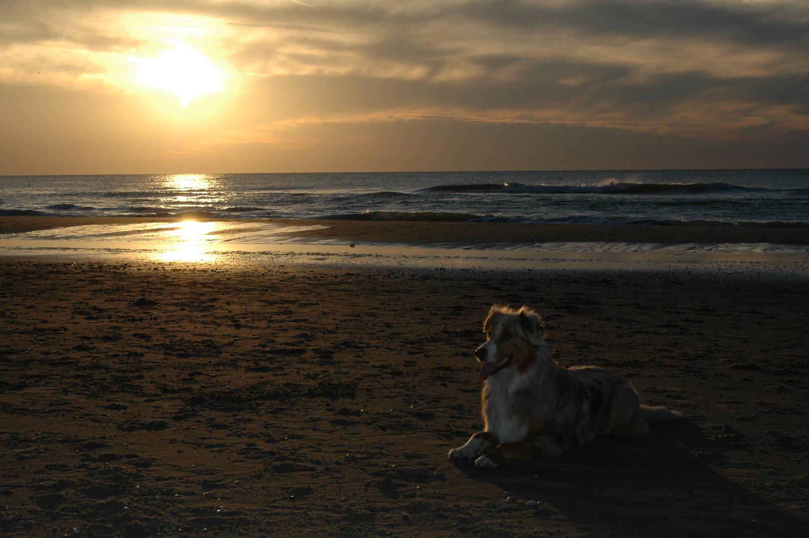 Nächster Hund am Strand !!!