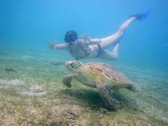 Nager avec les tortues
