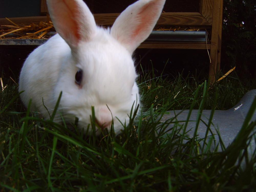 Nahaufnahme von meinem Bunny :)