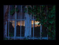 """NAHTOD-ERFAHRUNG... - ...marodes Efeu-Fenster...  - AUSSTELLUNGS-FOTO """"WERDEN UND VERGEHEN"""""""