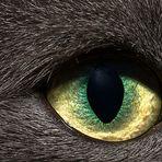 Naja's eye