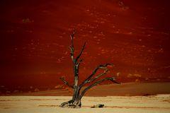namib tree
