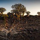 Namibia #10