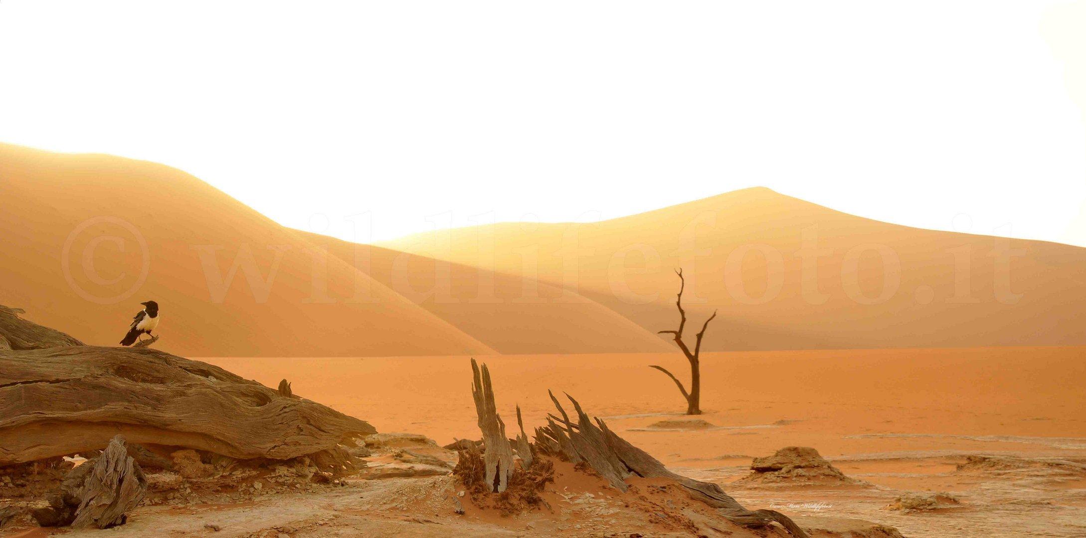 Namibia Death vlei