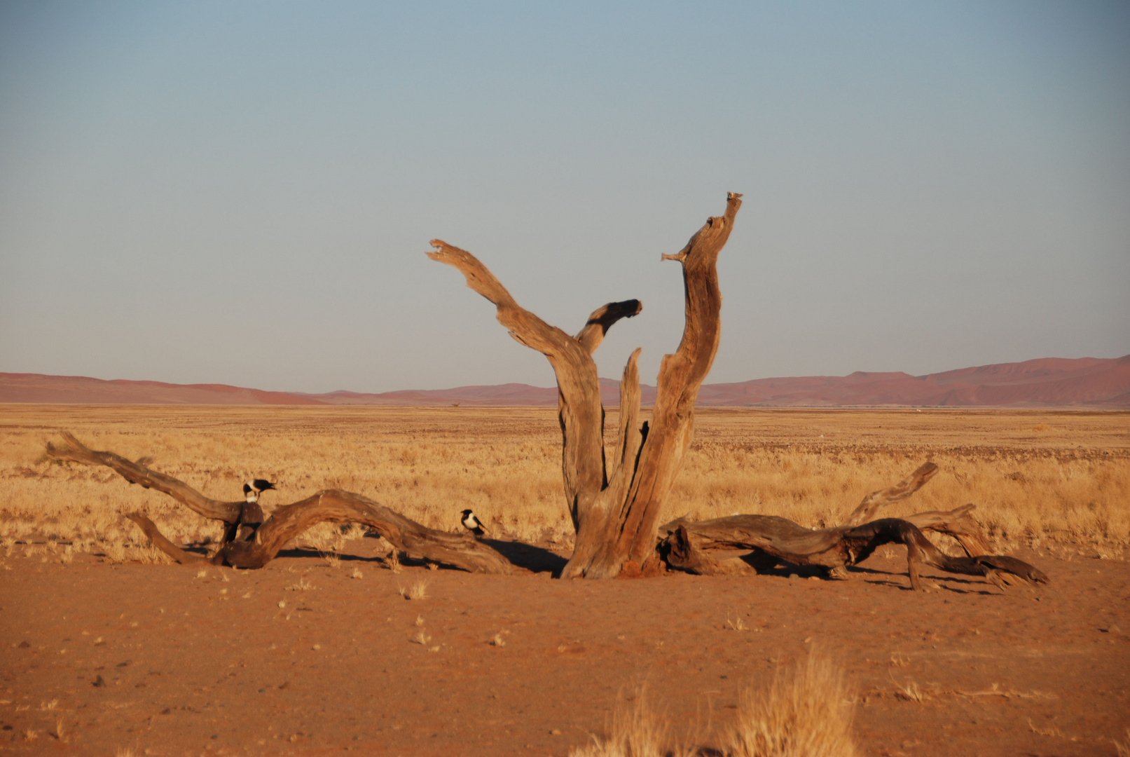 Namibia - Deserto Panorama