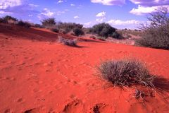 NAMIBIA: Die Kalahari