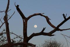 Namibia - Dieser Mond musste mal eingerahmt werden