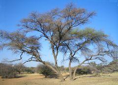 Namibia - Faszination Landschaft / Himmel