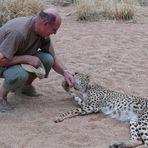 Namibia - Hautnahe Berühung mit einem Gepard