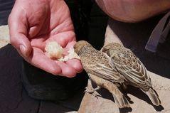 Namibia - Hier fressen die Vögel noch aus der Hand