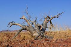 Namibia - Im Damaraland