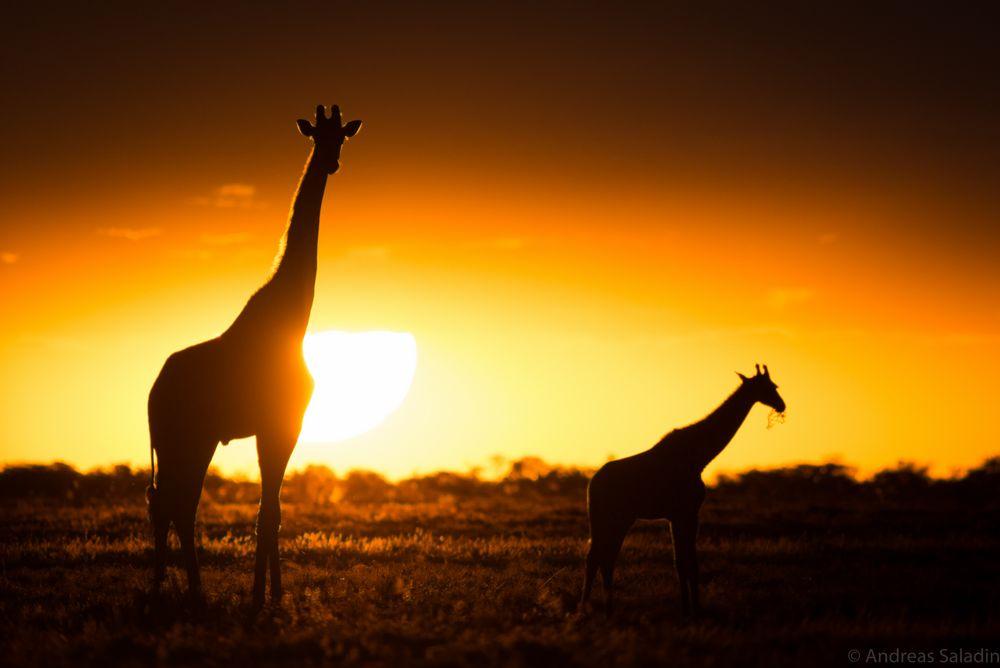 Namibia - Magic Moments