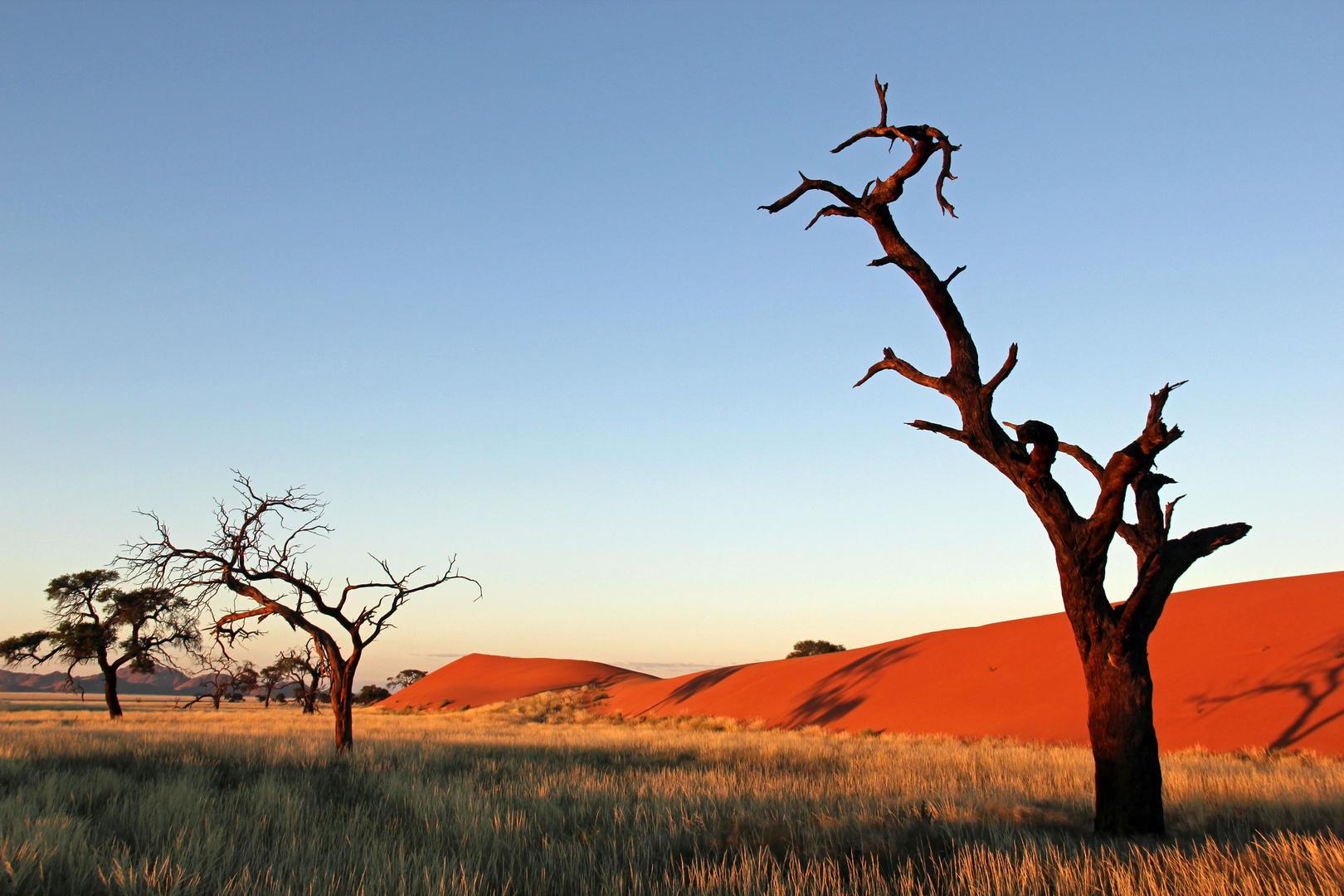Namibia - Morgenstimmung auf Kanaan
