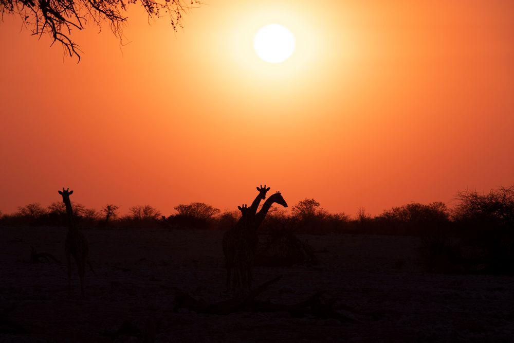 Namibia Series 04