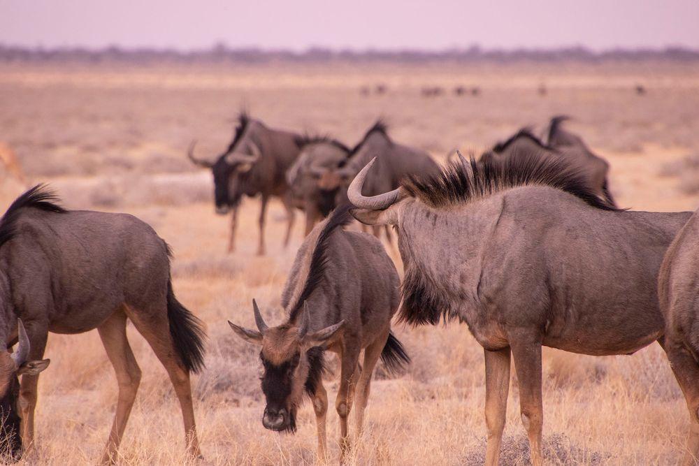 Namibia Series 06