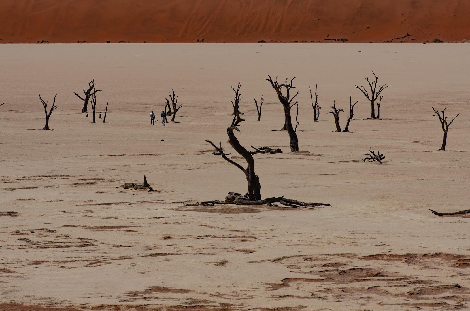 Namibia Sossusvlei Dead Vlei