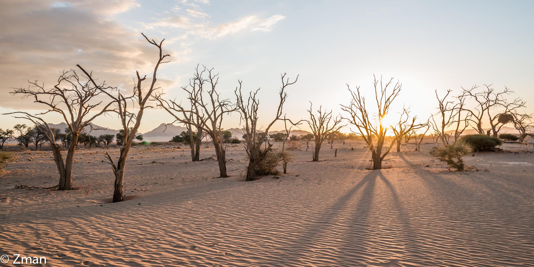 Namibia The Wild 04