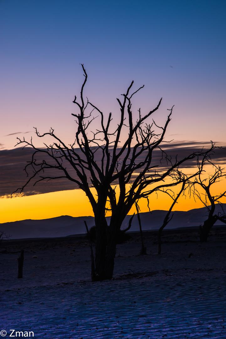 Namibia The Wild 06