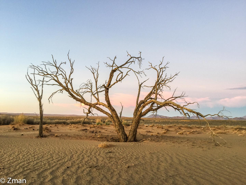 Namibia The Wild 07