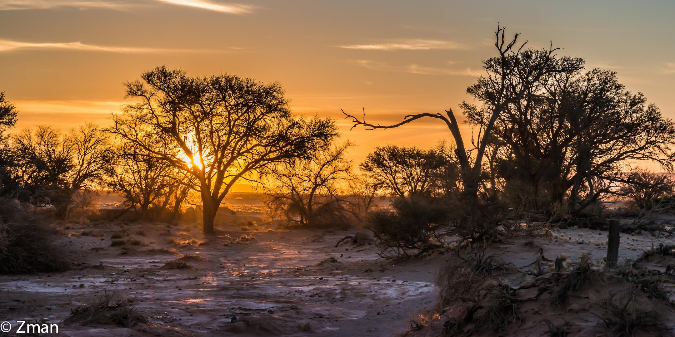Namibia The Wild 13