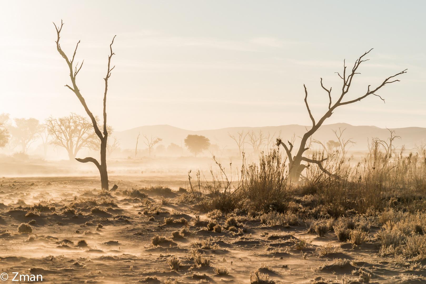 Namibia The Wild 19