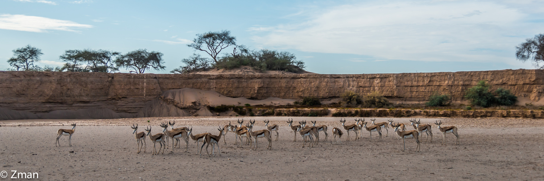 Namibia The Wild 24