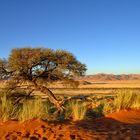 Namibia - TraumBlick