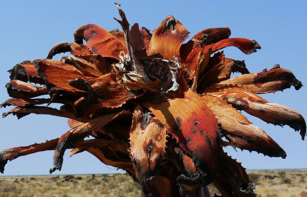 Namibia - Verbrannt - und trotzdem noch schön