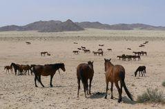 Namibia - Wild Horses in Garub