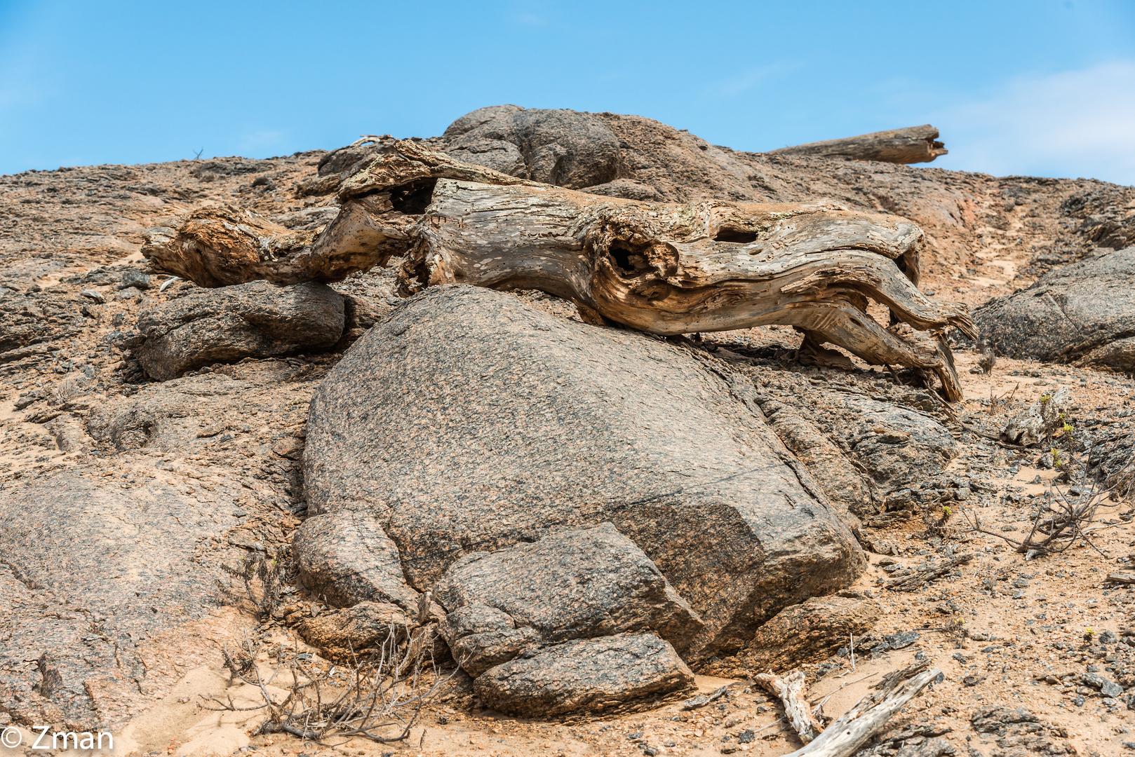Namibia Wilderness 07