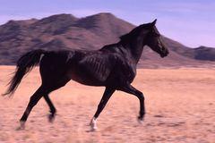 NAMIBIA: Wildpferd bei Aus (so nah kam ich nie wieder)