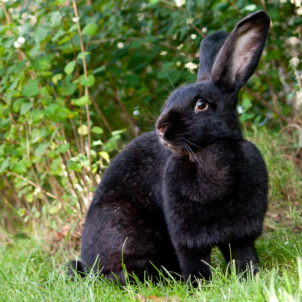 nanu wo ist der fr hling hin foto bild tiere haustiere nagetiere kaninchen bilder auf. Black Bedroom Furniture Sets. Home Design Ideas