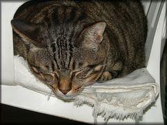 Nap cat.