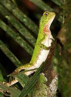Napo Wildlife Center Reptil
